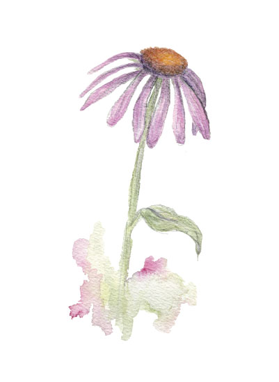 art prints - Pink Echinecea Flower by Larkspur and Laurel