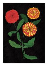 Zippy Zinnias by Sabrina Hoeke