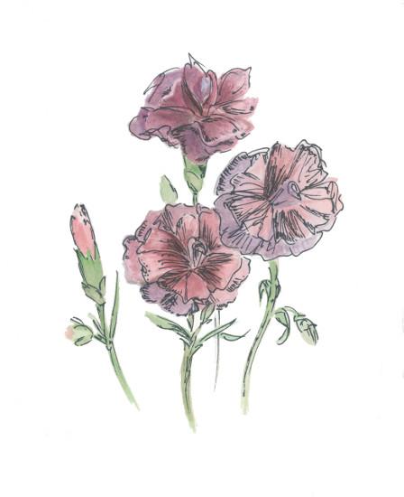 art prints - Carnation by Julie and Sara
