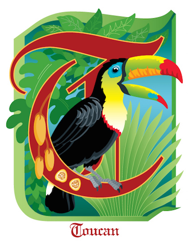 art prints - T is for Toucan by Barbara Ball