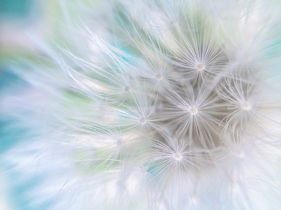 art prints - Blow Some Wishes by Jennifer Ritterman