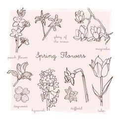 Spring Flower Chart