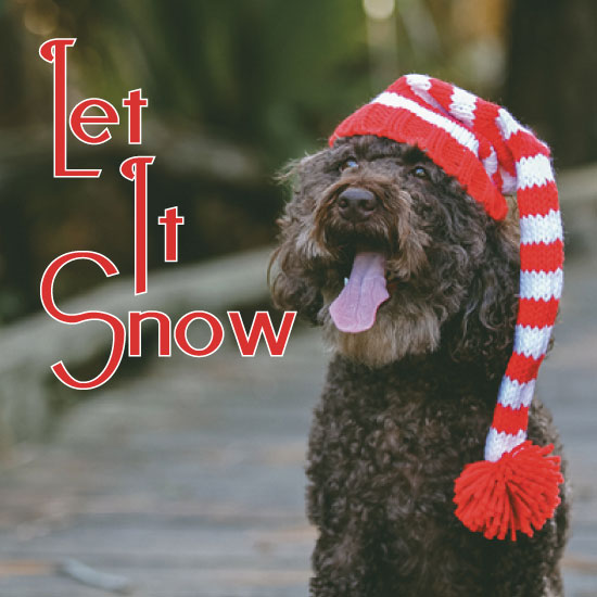 holiday photo cards - LetItSnow by Christine Arrigo