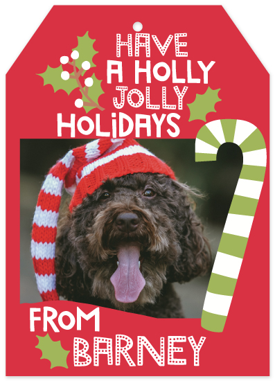 holiday photo cards - HOLLY, JOLLY, HOLIDAYS by Stacy Cooke