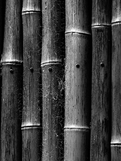 art prints - Cobwebs on a Bamboo Door by Mariecor Agravante