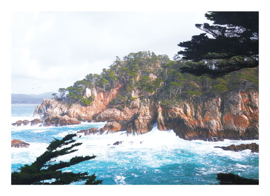art prints - Point Lobos by Easter