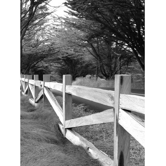 art prints - fences by christina tarzia