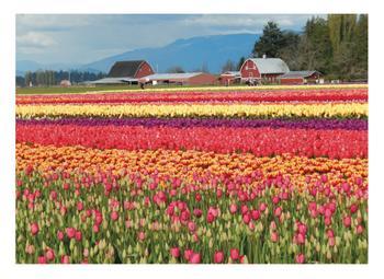Classic Tulip Town