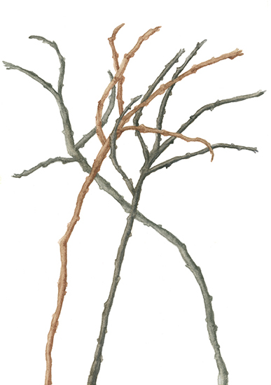 art prints - Bare Branches Along the Coast by Ellen Gordon