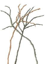 Bare Branches Along the... by Ellen Gordon