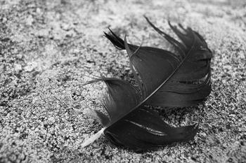 A Single Feather