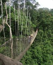 Rainforest Canopy Walk by Alyson Fraser