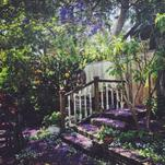 California Garden by Jessica Enlow