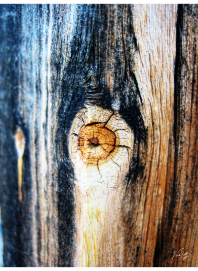 art prints - Wood macro by Alina Davis