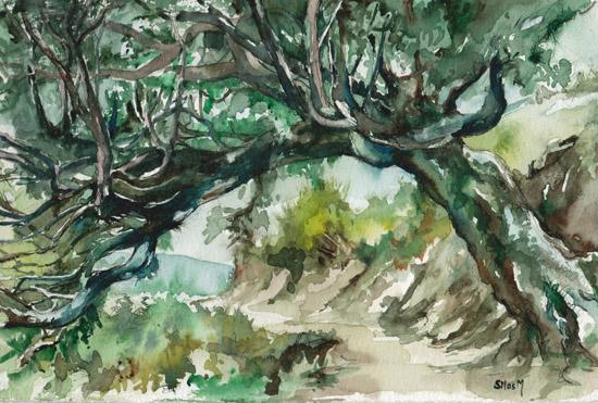 art prints - Mulbery Tree by Silas McDonough