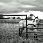 Bastrop by Lara Klinger