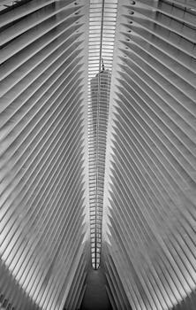 1 World Trade Center Through the Oculus