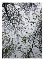 Leaves on the sky by julia grifol designs