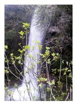 hidden waterfall by julia grifol designs