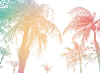 Aruba Breeze