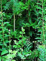 Mini jungle by Christine Rae