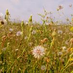 A wild field by Christine Rae