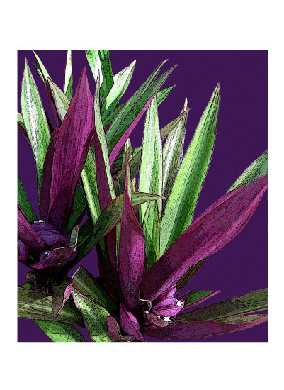 art prints - Purple Yucca by Judith Clifford