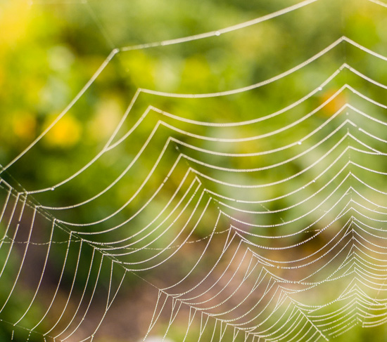 art prints - Morning Web by Sara Torbett