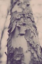 Layered Growth by Sara Torbett