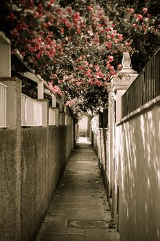 Pathway to yesterday