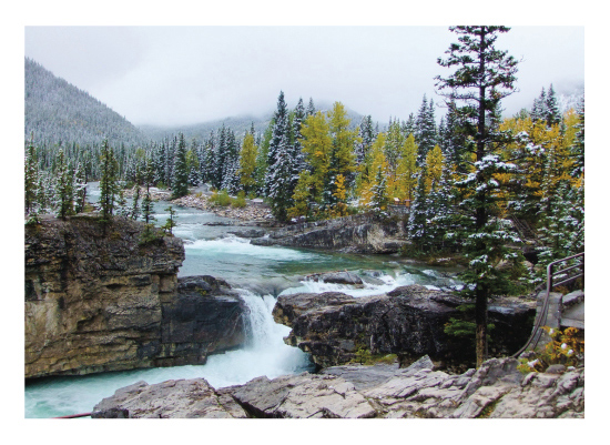 art prints - Elbow Falls with Tree by Wendy Dypolt