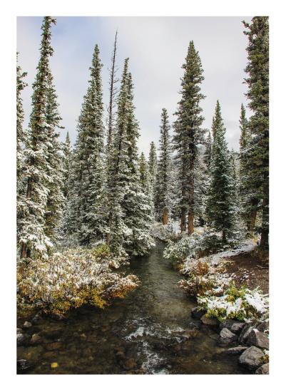 art prints - Kananaskis Forest Creek by Wendy Dypolt