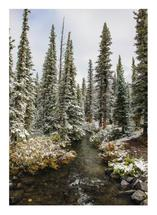 Kananaskis Forest Creek by Wendy Dypolt