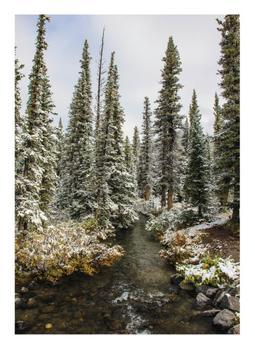 Kananaskis Forest Creek