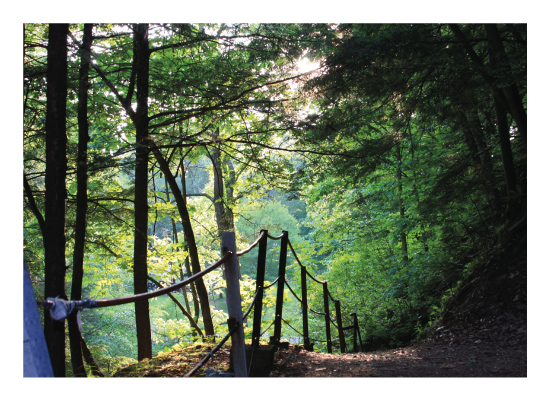 art prints - Out Of The Woods by Debbie Fieno