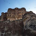 Jodhpur and Birds by Amelia Lepak