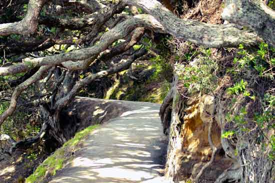 art prints - New Zealand Mountain Path by Dennis Landry