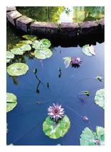 Lotus by Erin Hays
