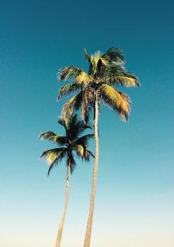 Palm Sunday 2