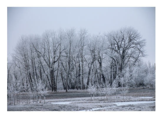 art prints - Winter Wonderland Fish Creek Park by Wendy Dypolt