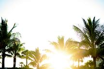 Palms on the Gulf of Me... by Georgia Bateman