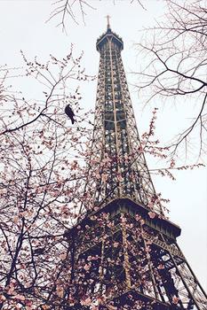 Bird in Paris