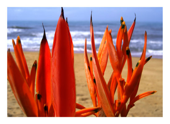 art prints - Orange plant standing near the ocean by Judith Clifford