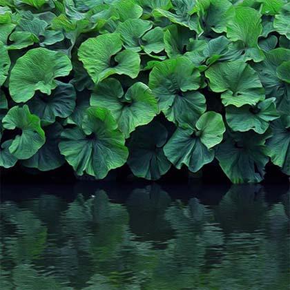 art prints - Water plants by Kasmira Mohanty