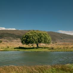 Pond in Nevis Valley