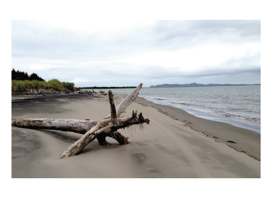 art prints - Ft. Stevens State Park by Susan Ralls