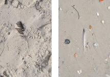 Two Feathers Diptych by Studio Guerassio