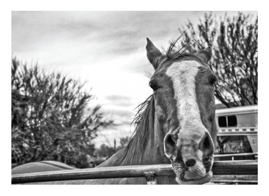 art prints - Desert Horse by Mel P