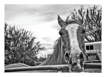 Desert Horse by Mel P