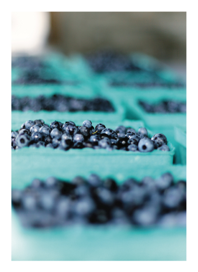 art prints - Maine Blueberries by Panda and Pangolin